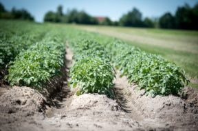 agriculture-2654157_1920