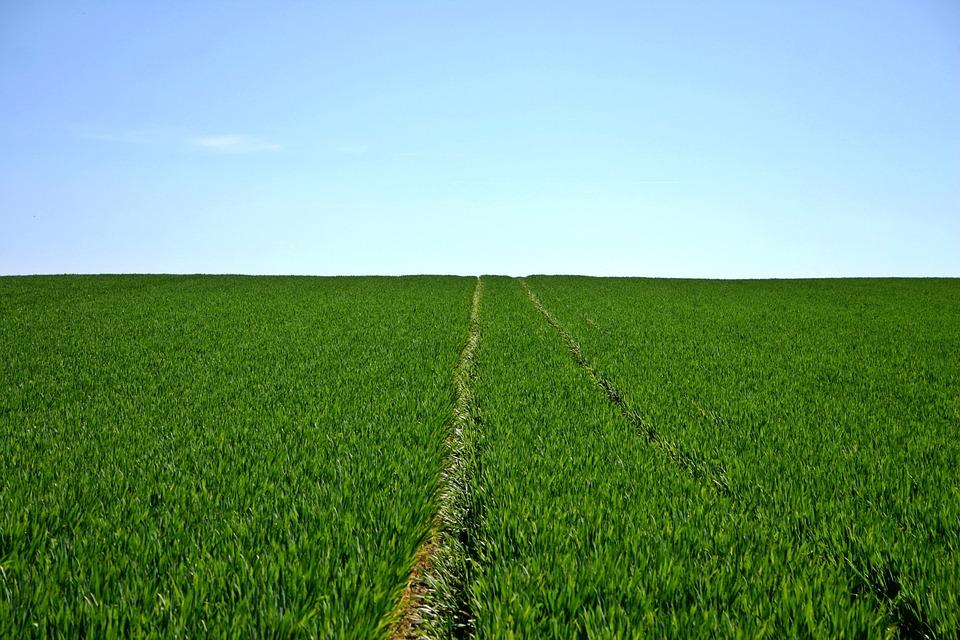 Aplikacja xarvioTM FIELD MANAGER – nowe narzędzie ułatwiające utrzymanie dobrego stanu upraw