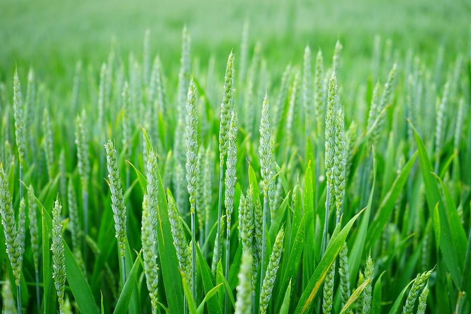 Techniki uszlachetniania nasion