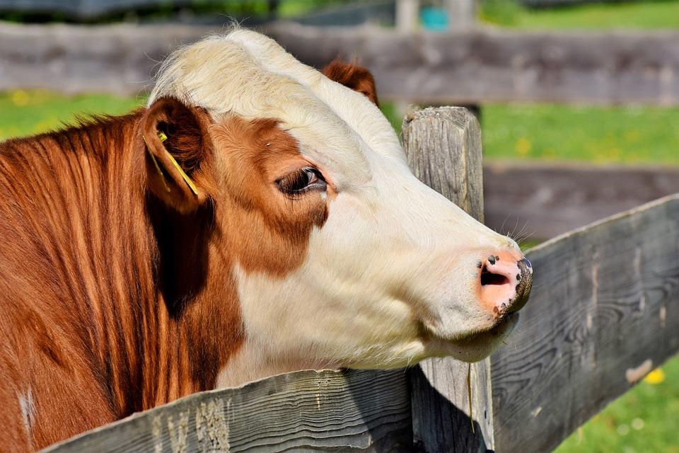 Konsekwencje nieterminowego zgłaszanie zdarzeń dotyczących zwierząt gospodarskich