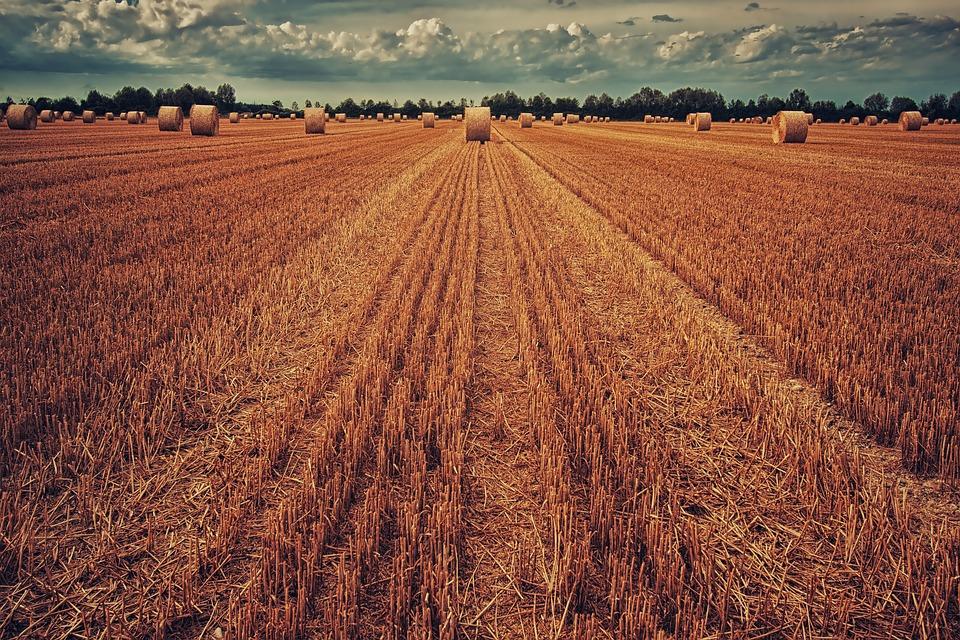 Jak zwiększyć zawartość próchnicy w glebie?