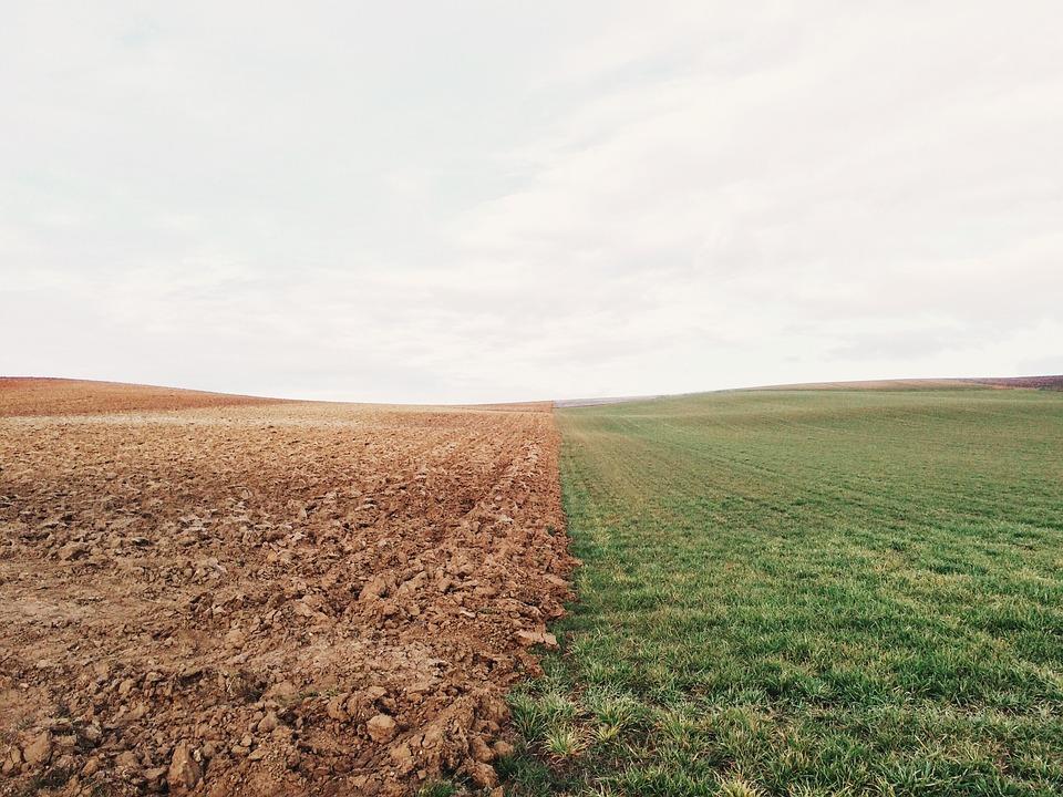 Susza a gleba