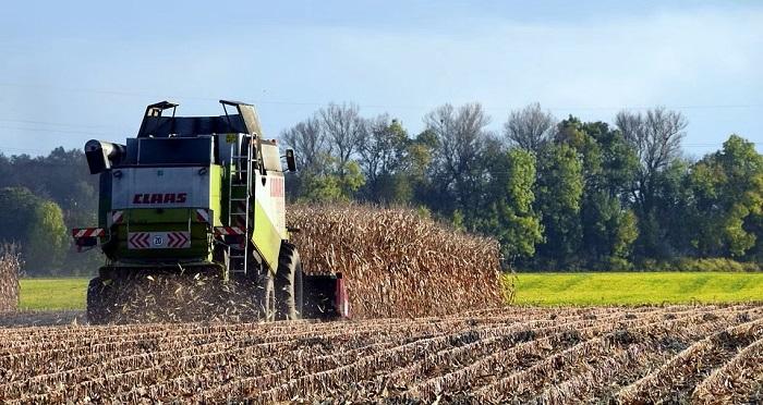 Podsumowanie sezonu uprawy kukurydzy