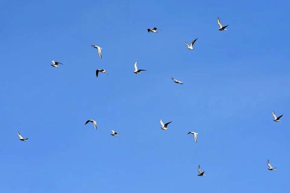 Grypa ptaków w Rumunii