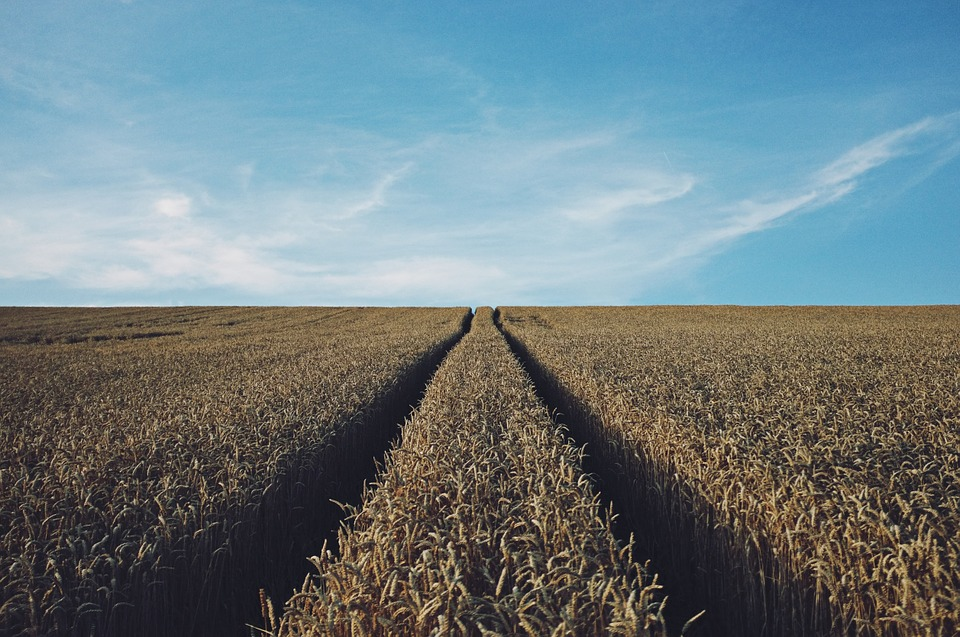 Rośnie eksport ukraińskich zbóż