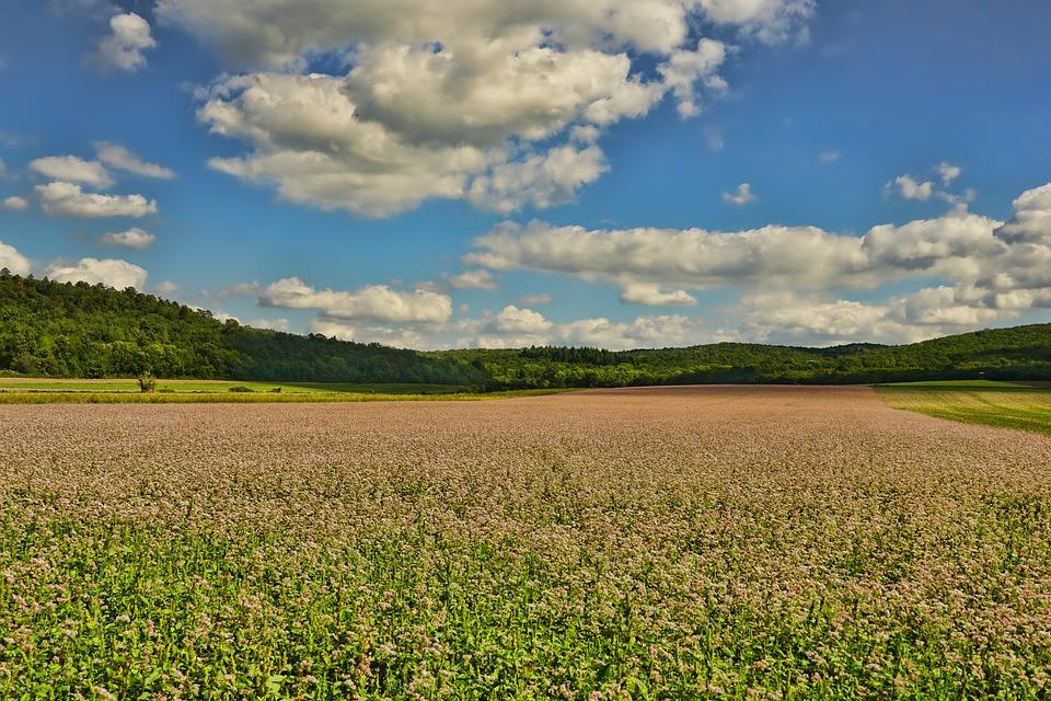 Przewaga rolnictwa ekologicznego nad konwencjonalnym
