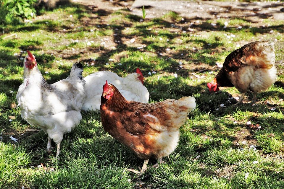 Jak zarabiać na gospodarstwie ekologicznym?