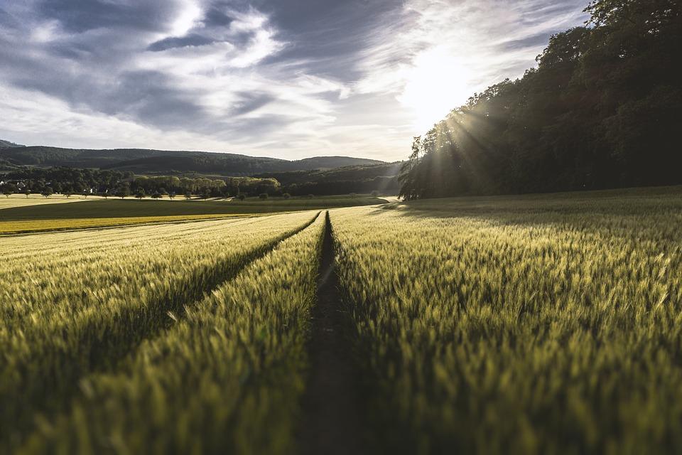 """Termin naboru wniosków o przyznanie pomocy na operacje typu """"Premie dla młodych rolników"""""""