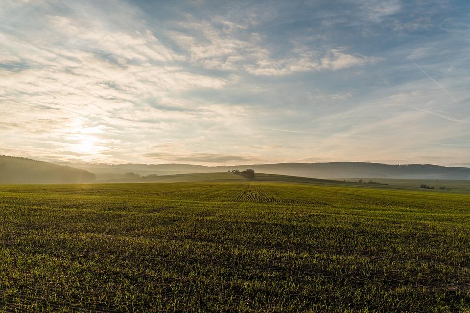 Zaliczki na dopłaty bezpośrednie: 8,7 mld zł na kontach rolników
