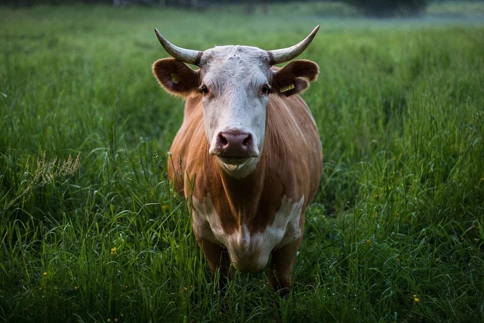 Najważniejsze zalety rolnictwa ekologicznego