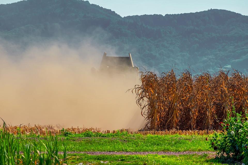 Zaskakujący rekord zbioru kukurydzy