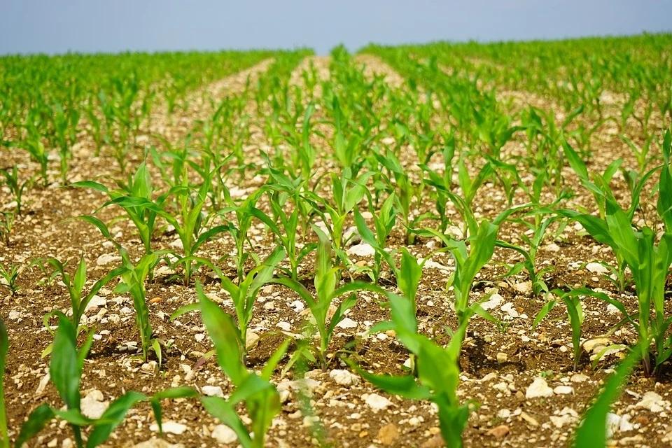 Czy wielkość nasion ma znaczenie?