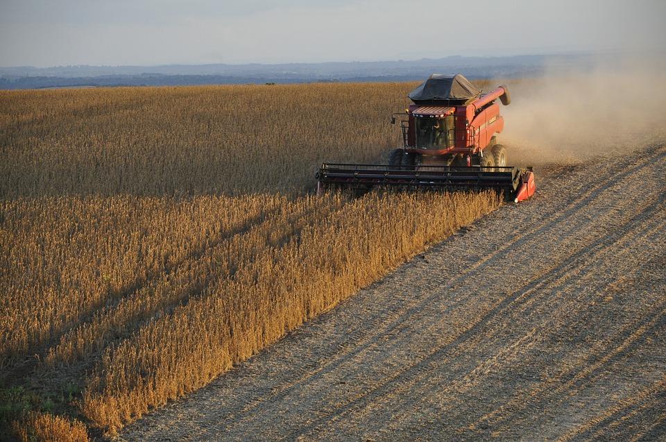 Stosowanie pasz GMO w żywieniu zwierząt