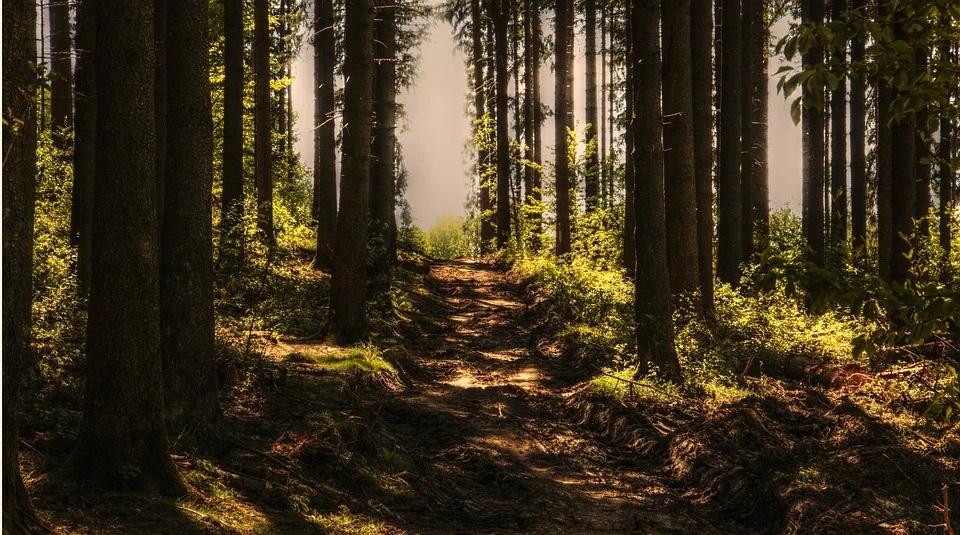 Dofinansowanie z PROW 2014-2020 do prywatnych lasów